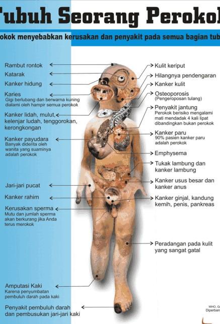 Konsep Fisiologi Olahraga (Ilmu Faal Olahraga)
